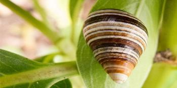 Snail with house on a green leaf.
