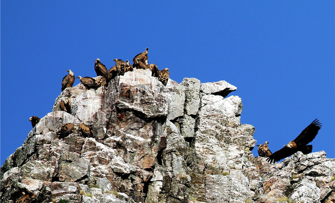 Vultures, Mountain, Rocks, Sky