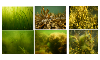 collage of different types of underwater plants