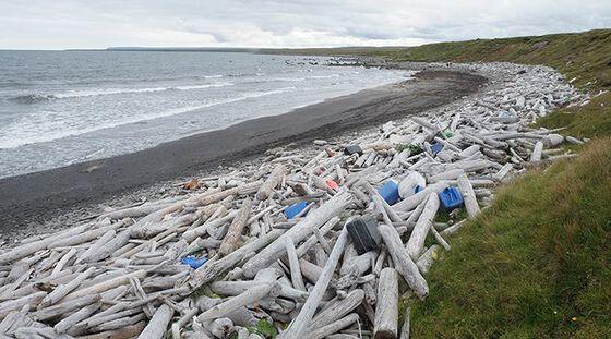 Strand med kvist, trestammer og plastsøppel.