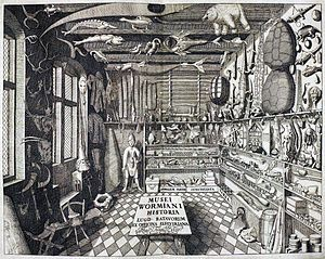 A big room with many different things like dolls, animals, books etc. Drawing.