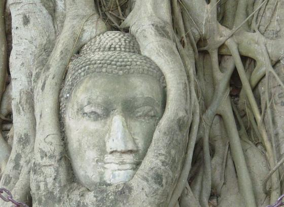 A buddha statue overgrown with roots from a tree. Photo.