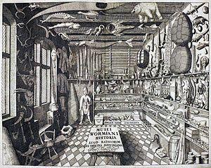 Stort rom med mange ting i hyller og andre steder. Utstoppede dyr, bøker, dukker og mye mer. Tegning.