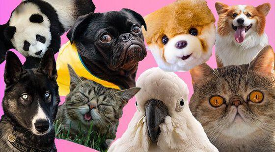 Bildet kan inneholde: organisme, virveldyr, hud, hund, kjøtteter.